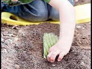 خاک بازی کودکان مضر است یا مفید؟